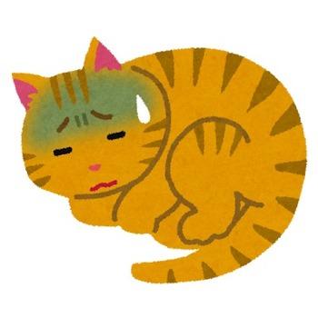 pet_byouki_cat