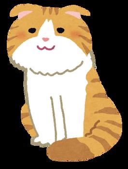 cat_scottish_fold