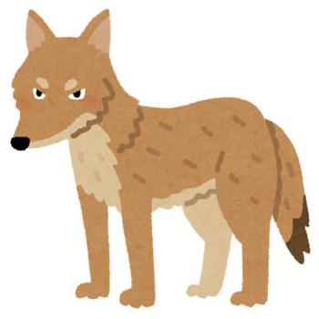 animal_coyote