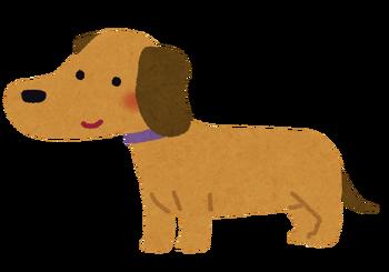 dog_miniature_dachshund
