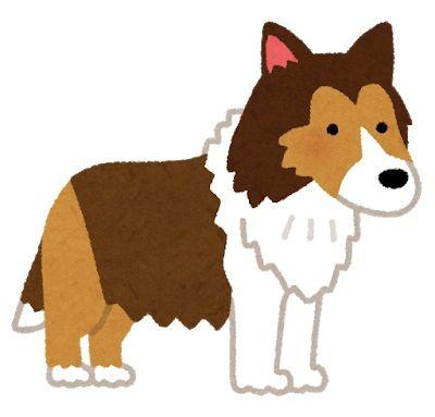 dog_shetland_sheepdog