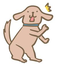 【悲報】ビートたけしみたいな犬、見つかる