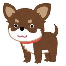 西内まりや(24)の癒し犬wwwwwwwwww