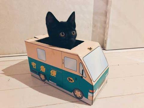「かわいすぎる」「配達お願いしたい」 黒猫さんによる新人ドライバー教育が目撃される