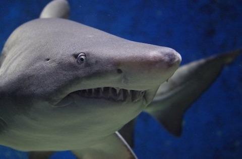 マジで面白いサメ映画ベスト10