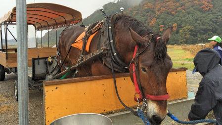 2014-11-29 torocoKameoka.jpg