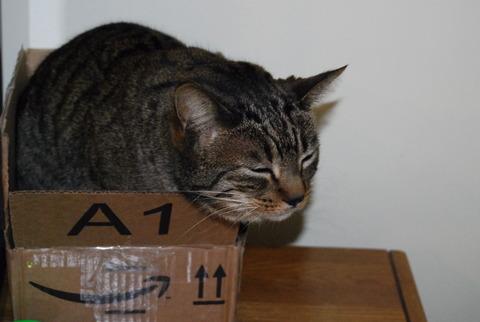 猫Amazon