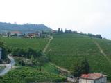 ワイン畑2