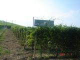 マルケージ畑
