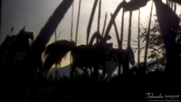 黒い砂漠 ドリガン