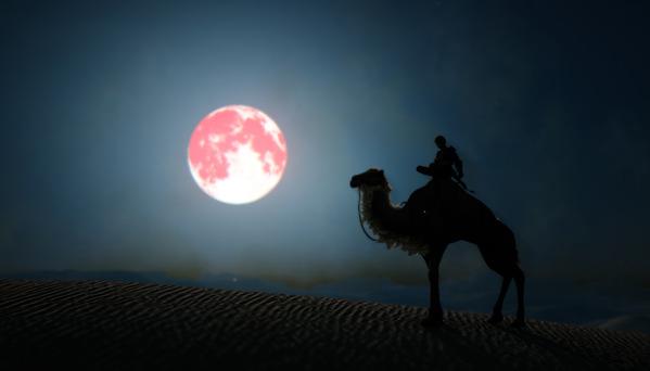 黒い砂漠 ラクダ 赤い月 ハロウィン