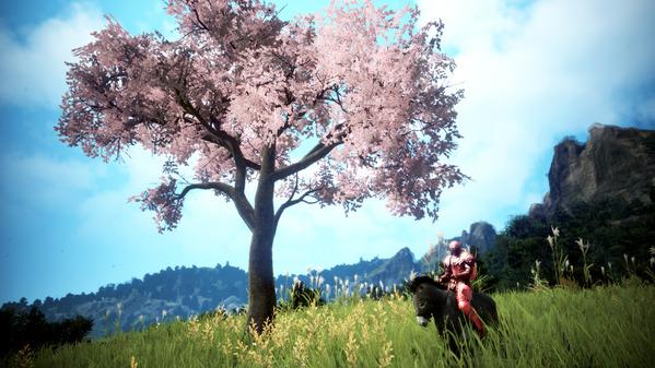 黒い砂漠 格闘家 ロバ 桜