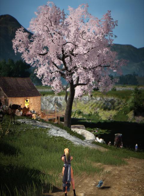 BlackDesert Valkyrie 桜