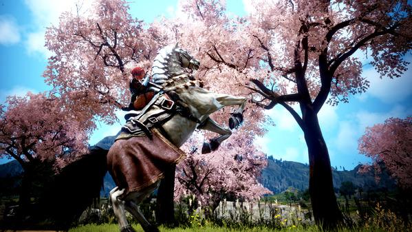 黒い砂漠 桜 8世代馬