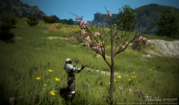 黒い砂漠 春爛漫イベント [EV]桜の木