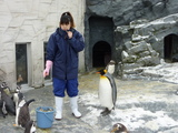 お行儀のいいペンギン
