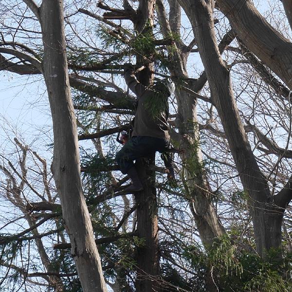 pruning trees02