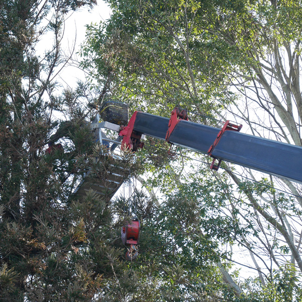 pruning trees01