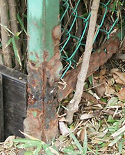 dog_urine_marking_fence01