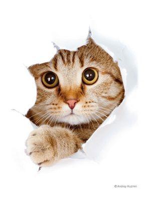 猫「呼んだ?」 スリーブ 20180922