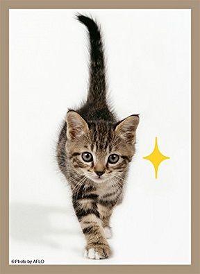 猫キラリ スリーブ 20180120