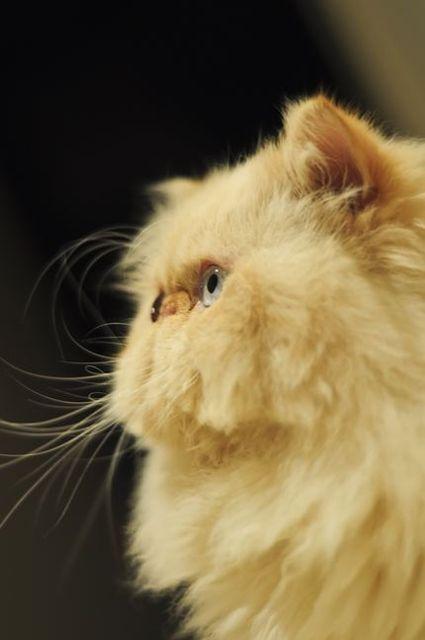 我が輩は猫である。君は我が輩を知っているか?