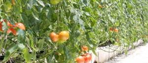 180121中村農園