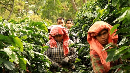 Sumatra-Gayo-Producer