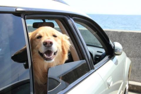 エアコンつけないで自動車の窓全開にして走ってる車なんなの?wwww