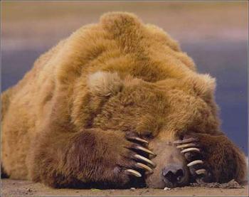 「クマとぶつかった」磐越道を走行中、乗用車の男性通報
