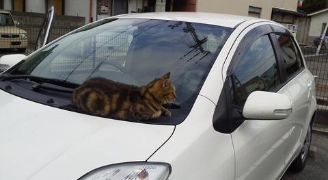 なんか車からネコの鳴き声してるんだが