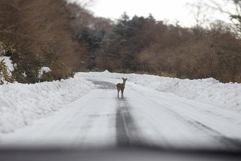 車の運転してて動物の飛び出し