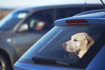 車の中に犬いた