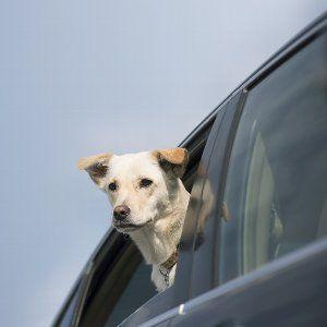 犬って車内に置いて