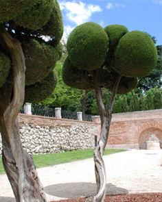 和ペリティーヴォな木