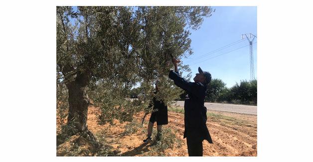 olive2_ph01