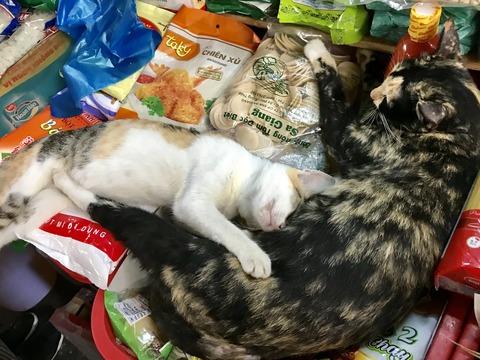 バーチウ市場猫