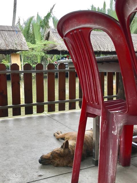 寝る犬エビ