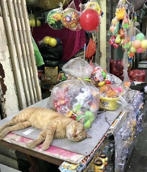 おもちゃ屋番猫