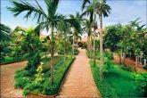 betel garden 3