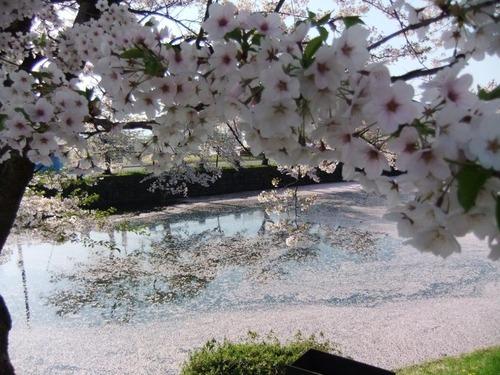 6花の絨毯