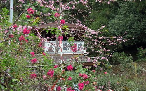台湾の素敵なお花