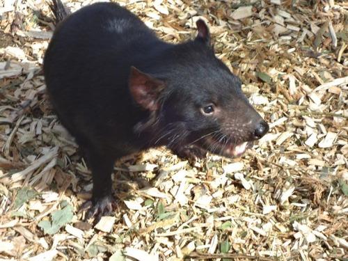 黒い動物DSC03452