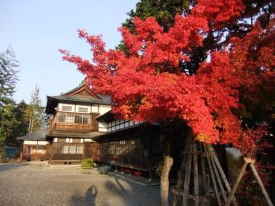 」美しい紅葉11月9日の幸せ