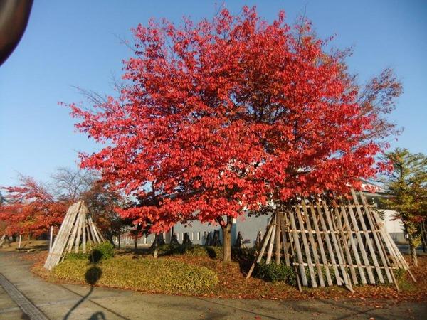 1米沢の秋