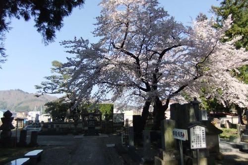 2016_04190017林泉寺の桜3