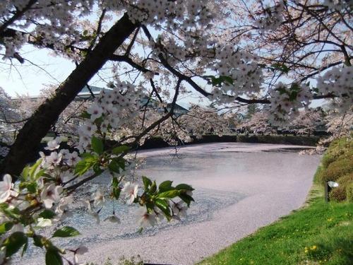 花の絨毯5