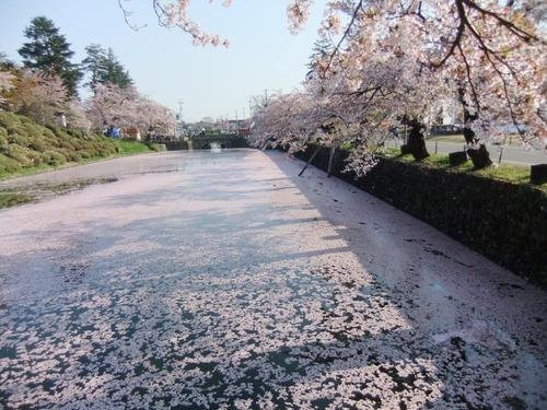 1桜の絨毯