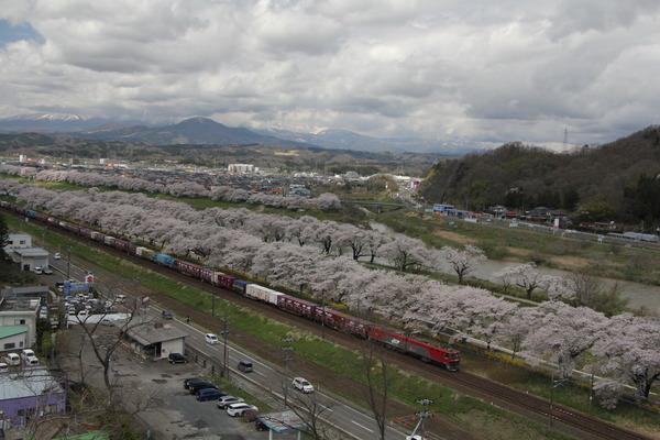 IMG_6782toho様からの船岡の桜