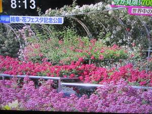 IMG_5060